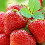 erdbeeren-verlinkungen