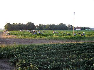 erdbeerenprodukt003
