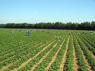erdbeerenprodukt004