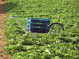 erdbeerenprodukt005