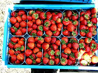 erdbeerenprodukt006